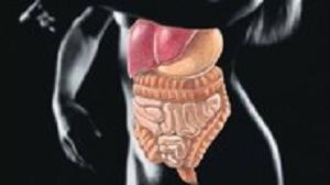 Anatomie et physiologie digestives